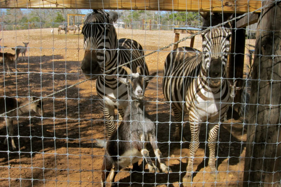 Capital of Texas Zoo